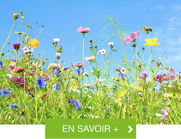 En savoir + sur la biodiversité