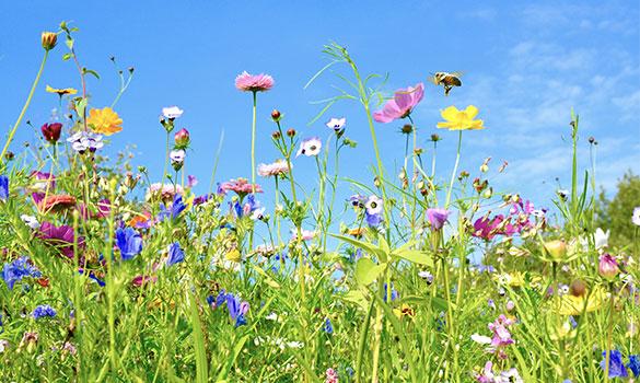 Agissons pour la biodiversité